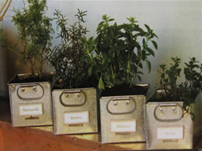 Huerto familiar cultivo de hierbas arom ticas y for Cultivo de albahaca en interior