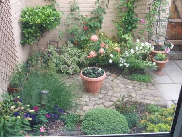 piante rampicanti all'interno di un giardino