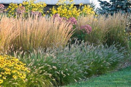Le Graminacee ornamentali sono un ottimo alleato nella progettazione dei giardini, l'altezza, il movimento e le varie colorazioni sono le loro caratteristiche più importanti