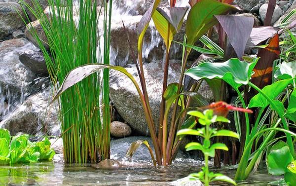 5 piante ideali per il laghetto guida giardino for Plantas para estanques