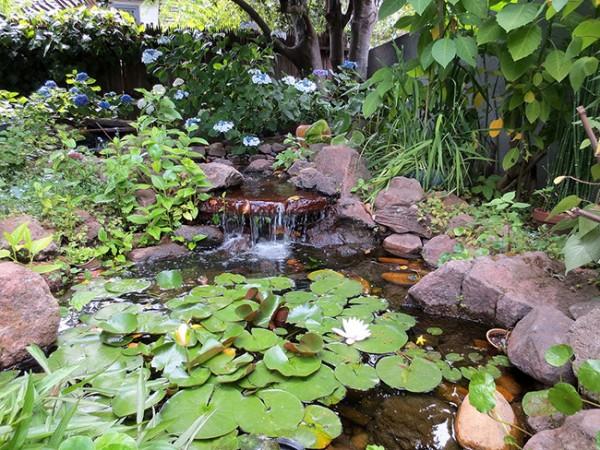 Lago con piante acquatiche all'interno di un giardino