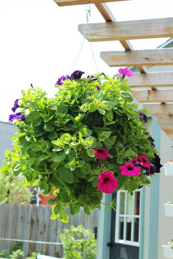 riciclare un contenitore significa anche risparmiare denaro, dato che questa tipologia di vaso è realmente costosa.