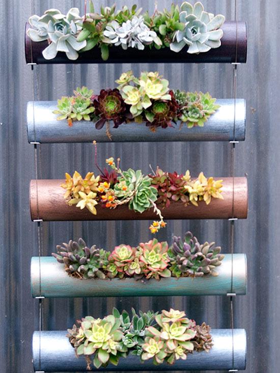 giardino verticale di piante grasse