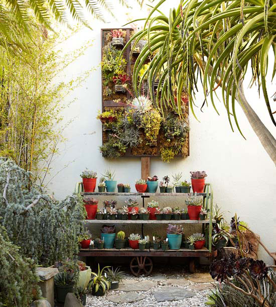 collezione di piante, disposte in una struttura realizzata ad hoc