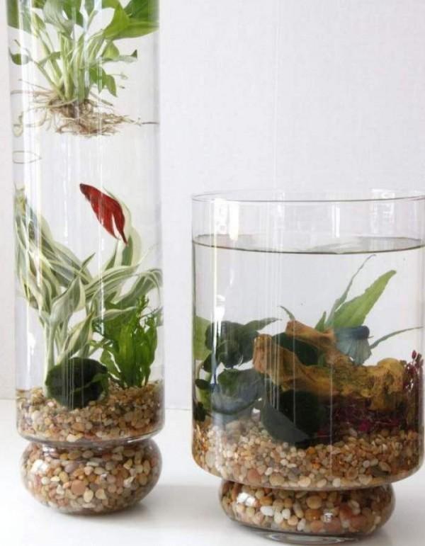 Peceras con plantas