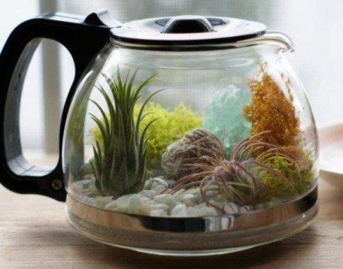giardino acquatico indoor
