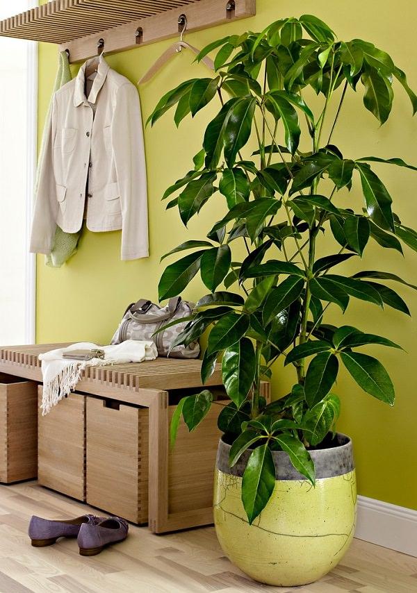 Estremamente 18 piante d'appartamento che non richiedono manutenzione | Guida  RN48