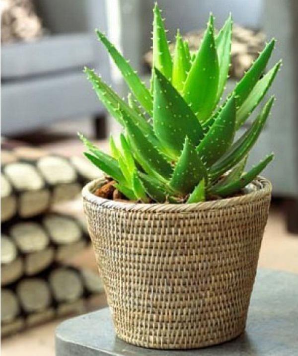 18 piante d appartamento che non richiedono manutenzione guida giardino - Piante da interno poca luce ...