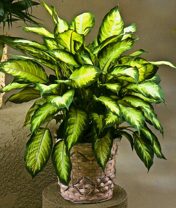 18 piante d appartamento che non richiedono manutenzione - Piante da interno purifica aria ...