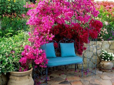 la Buganvillea: la sua fioritura è generosa e i fiori possono essere si svariate colorazioni (rosa, rosso, giallo, viola)