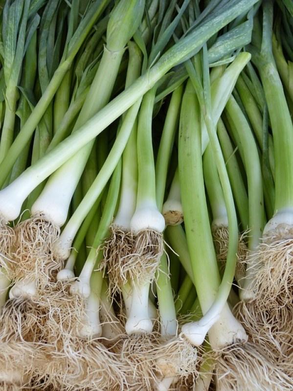 Esistono numerose varietà di cipolla che si prestano molto bene alla coltivazione in contenitore