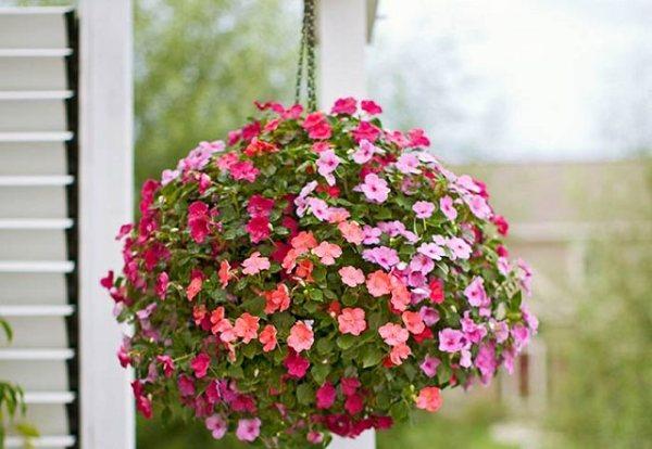 las-mejores-plantas-para-cestas-colgantes-11
