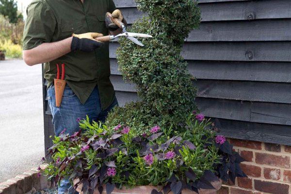 Giardinaggio Creativo Come Trasformare Un Semplice Arbusto In Una