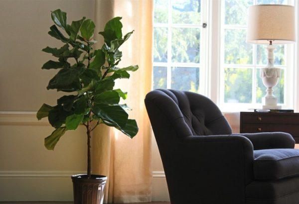 pianta indoor