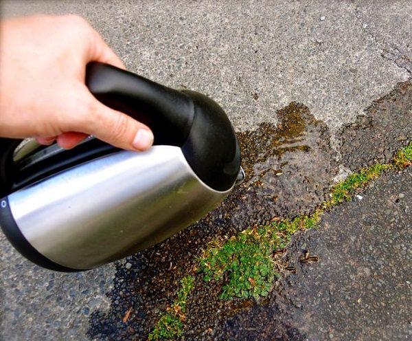 L'acqua bollente uccide tutte le piante che tocca; si tratta del rimedio più semplice, economico e particolarmente efficace per uccidere le erbacce annuali