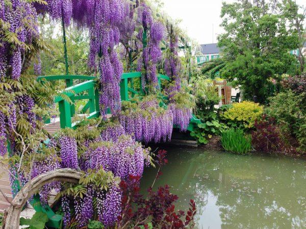 5 meravigliose rampicanti perenni che possono crescere in for Migliori piante da terrazzo