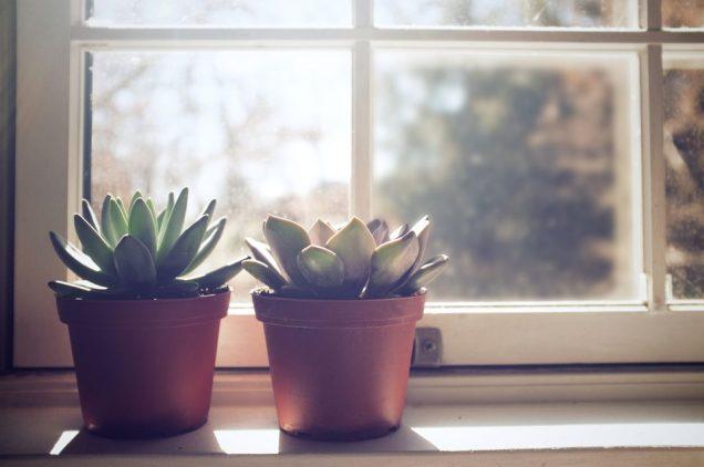 Posizionare una pianta da interno, che nella maggior parte dei casi è di origine tropicale, vicino ad una porta che si apre spesso o accanto ad una finestra non ben isolata, può risultare fatale
