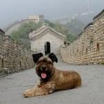 El asombroso viaje de Oscar, el perrito rescatado de la calle - oscar14