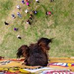 El asombroso viaje de Oscar, el perrito rescatado de la calle - oscar4