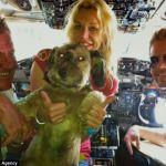 El asombroso viaje de Oscar, el perrito rescatado de la calle - oscar5