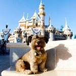 El asombroso viaje de Oscar, el perrito rescatado de la calle - oscar6
