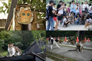 Houtong: el barrio de los gatos en Taiwán - houtong-2-300x199