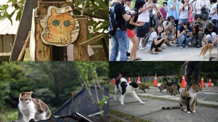 Houtong: el barrio de los gatos en Taiwán