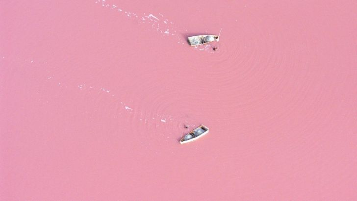 Un paseo color de rosa
