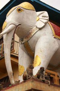 El monte Popa: la residencia de 37 espíritus - monte-popa-elefantes-5-199x300