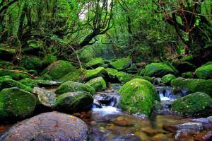 La isla del Sugi - yakushima-9209612-o-300x199