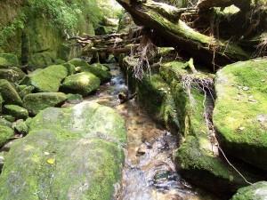 La isla del Sugi - yakushima-trekking-forest-559501-h-300x225