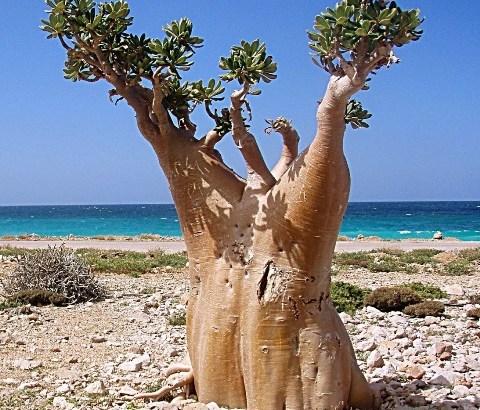 Socotra, un paraíso raro y único