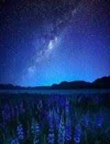 Lago Tekapo, naturaleza austral - blog2_-229x300