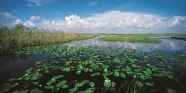 Everglades, el mar de pastos. - EVERGLADES-FLORIDA-300x150