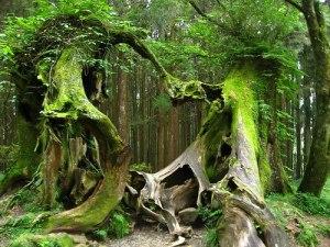 Bosque de Hoh (Washington, EE.UU.) - Hoh-forest-300x225