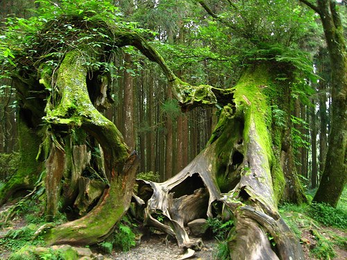 Bosque de Hoh (Washington, EE.UU.)