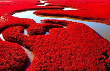 La Playa roja de Panjin