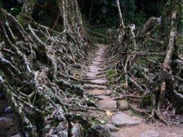 Cherrapunji: el lugar más lluvioso del mundo. - r2-300x225