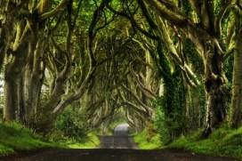 Dark Hedges (Irlanda) - Dark-Hedges_017_800x533-300x200