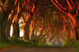 Dark Hedges (Irlanda) - sFiz8cl-300x200