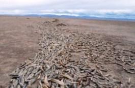 Poopó, el lago desaparecido - POOPO_1-300x196