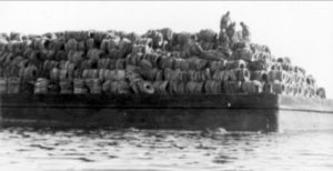 Arrecife Osborne: ecología basura - osborne-tire-reef-13-300x154