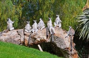 Bioparc: vacaciones con niños - Lémures-de-cola-anillada-300x196