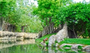 Bioparc: vacaciones con niños - Madagascar-300x176