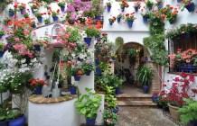 10 patios cordobeses que no te puedes perder - patio_calle_alvar_rodriguez_11-300x193