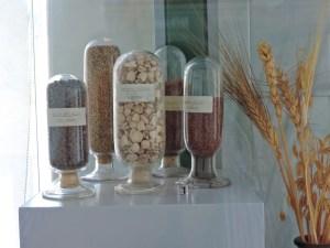 Museo Veterinario Complutense - Semillas de diferentes plantas forrajeras, para alimentación de animales.