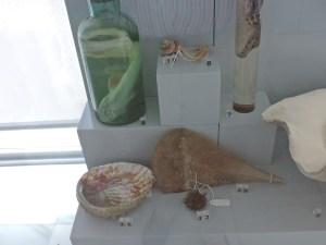 Museo Veterinario Complutense - Pintarroja, conservado en formol, y esqueletos de varios moluscos.