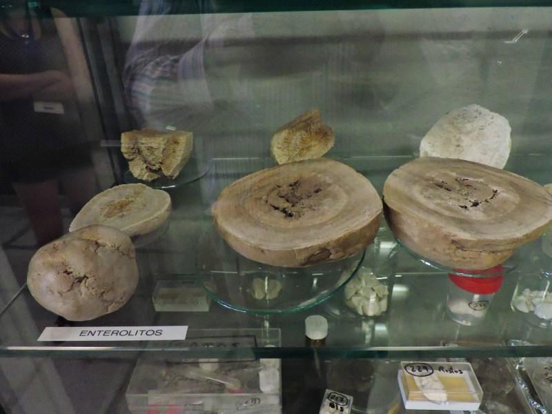 Museo Veterinario Complutense - Enterolitos de équidos.