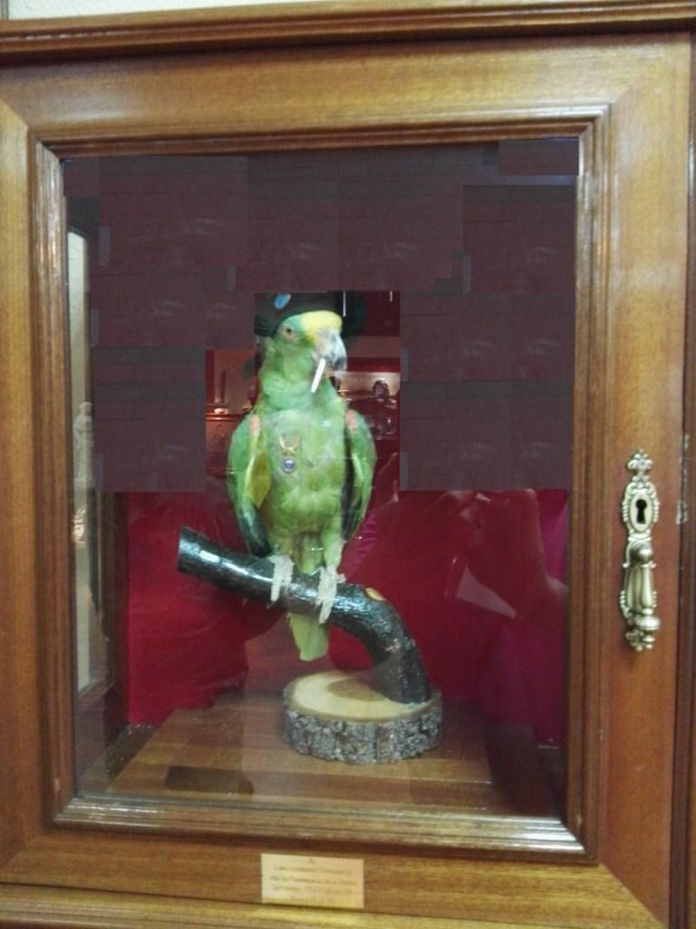 """Museo de la Bripac - """"Loro paracaidista"""", mascota que tuvieron en la Bripac durante 17 años."""