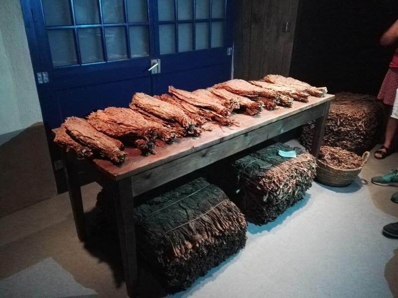 Museo del Tabaco - Hojas de tabaco secas, tal cual se recibían en la fábrica.